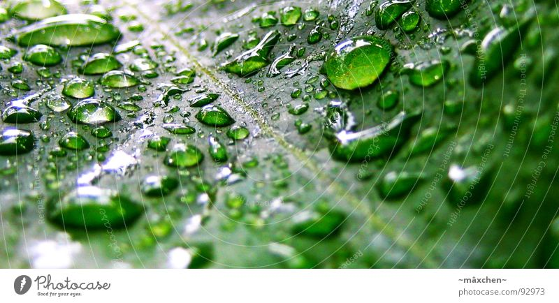 raindrop VI Regen Blatt Gefäße grün Erfrischung Kühlung feucht nass glänzend rund eckig knallig mehrfarbig Pflanze Makroaufnahme Nahaufnahme Wasser raindrops