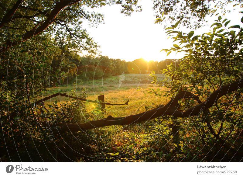 Weideglück Natur Pflanze schön grün weiß Baum Erholung Einsamkeit Landschaft ruhig schwarz Wald gelb Gras natürlich hell