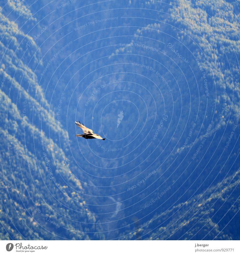 flei hei Natur Landschaft Pflanze Tier Luft Sommer Schönes Wetter Wald Alpen Berge u. Gebirge Wildtier 1 fliegen hoch blau grün Rundflug Gleitflug Farbfoto