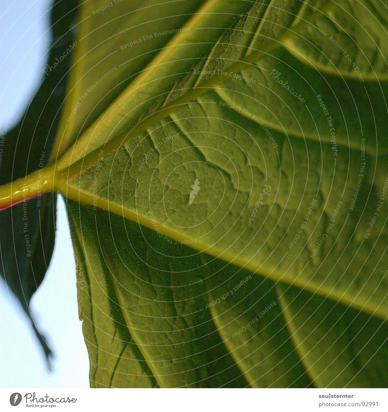 Unter dem Schirm... grün blau Pflanze Blume Blatt Frühling Regenschirm Stengel Gefäße Faser Blattgrün