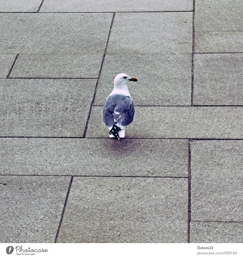 folge mir unauffällig alt Erholung Tier Senior grau Vogel Angst Tourismus gefährlich ästhetisch Beton Coolness planen Taube Treue Schüchternheit