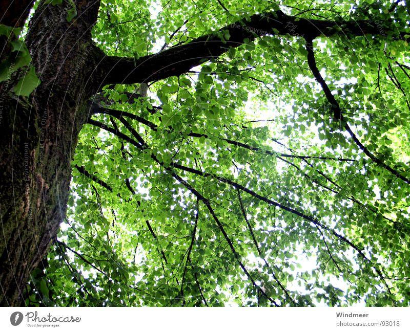 Let it rain (I) Baum Blatt Botanik Erfrischung Pflanze Photosynthese Frühling Geäst Sträucher Gegenlicht grün Natur Baumrinde springen Stengel Wald Garten Park
