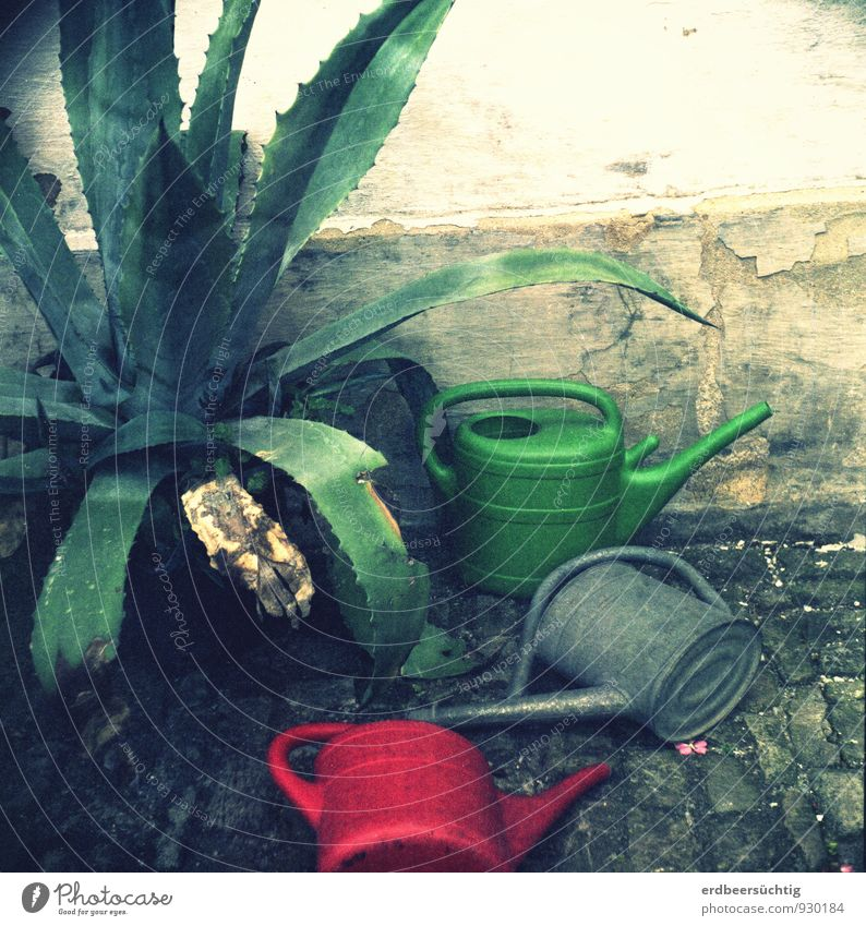 trash cans alt Pflanze grün rot liegen dreckig trist Vergangenheit Verfall trashig Putz abblättern Gartenarbeit Dürre Grünpflanze verblüht