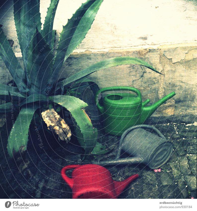 trash cans Gartenarbeit Dürre Pflanze Grünpflanze Gießkanne liegen verblüht alt dreckig trashig trist grün rot Verfall Vergangenheit vernachlässigen Putz