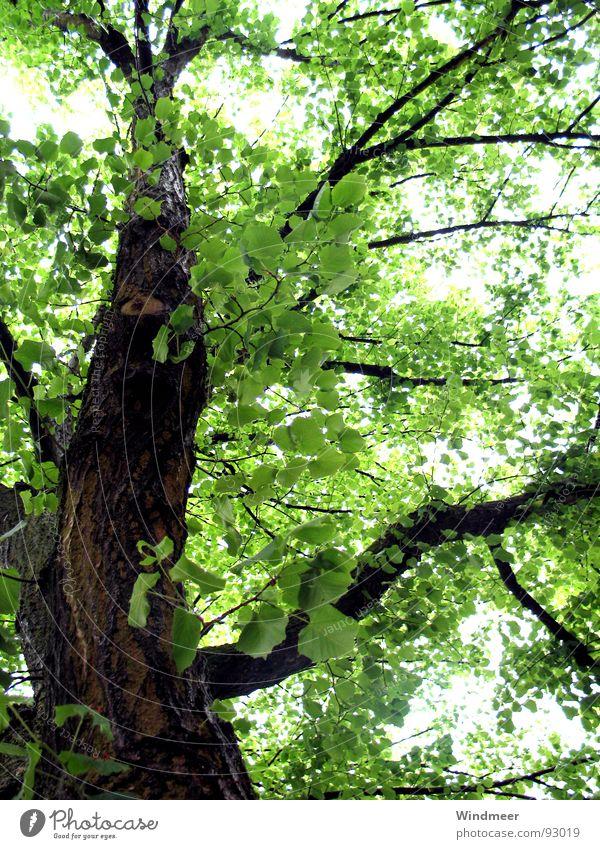Let it rain (II) Baum Blatt Botanik Erfrischung Pflanze Photosynthese Frühling Geäst Sträucher Gegenlicht grün Natur Baumrinde springen Stengel Wald Garten Park