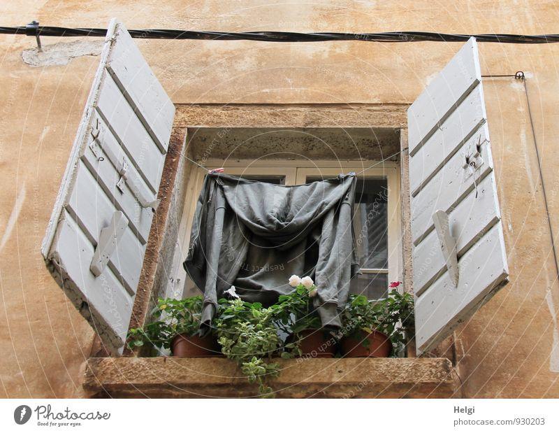 multifunktional... alt grün Blume Haus Umwelt Fenster Wand Leben Gebäude Mauer grau Holz Stein außergewöhnlich braun Ordnung