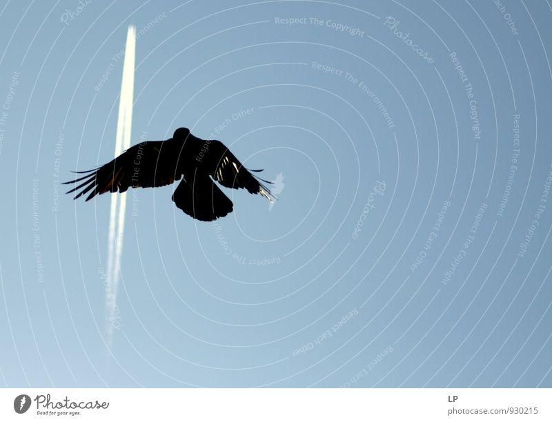 Himmel Natur blau schön Einsamkeit Ferne schwarz Gefühle fliegen Vogel Luft wild Kraft Zufriedenheit Erfolg frei