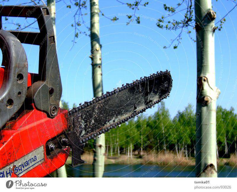 Kettensägen-Massaker Säge Holz rot Kraft gefährlich Abholzung fällen Holzfäller Baum Birke See Wald Maschine Werkzeug Außenaufnahme Brandenburg Gewässer Mann