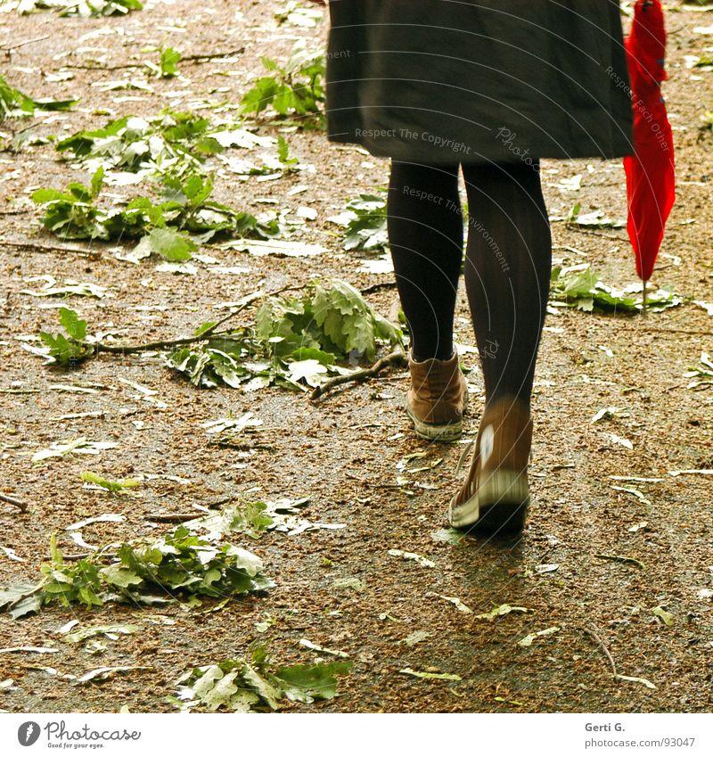 the storm Garten Frau Erwachsene Beine Sturm Blatt Park Regenschirm Bewegung fallen gehen rot Trauer Verzweiflung Sturmschaden Geäst unordentlich Blattsalat