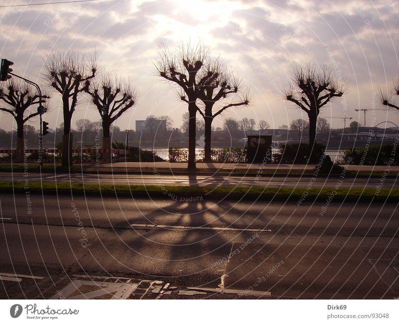 durchbruch Himmel Baum Sonne Wolken Einsamkeit Straße Köln
