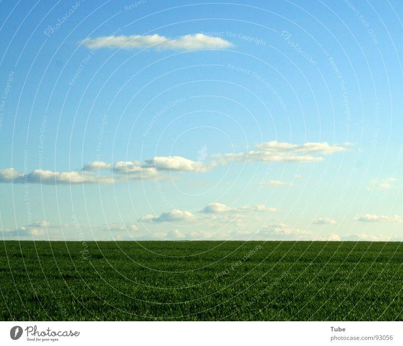Hinterm Horizont...... Himmel Natur blau weiß grün Wolken Landschaft Ferne Wiese Wärme Gras Freiheit Horizont Hintergrundbild Erde Feld