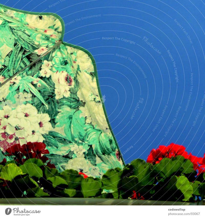oben bei gitte und rolf Blume rot Zufriedenheit Wohnung Möbel Balkon Sonnenschirm Haushalt Nachbar Pelargonie