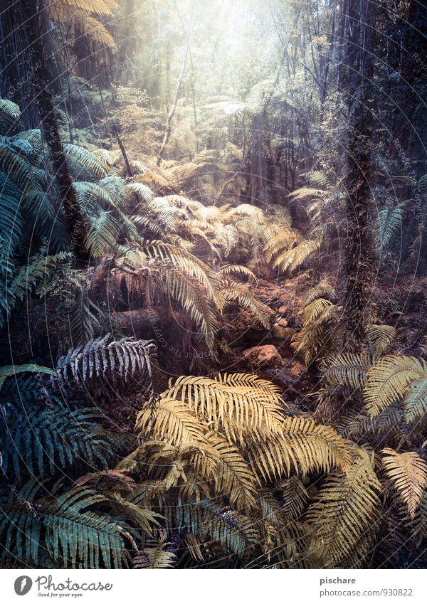 Fantasyland Natur Pflanze Farn Grünpflanze Wald Urwald dunkel exotisch Abenteuer Neuseeland Farbfoto Außenaufnahme Tag Lichterscheinung Starke Tiefenschärfe