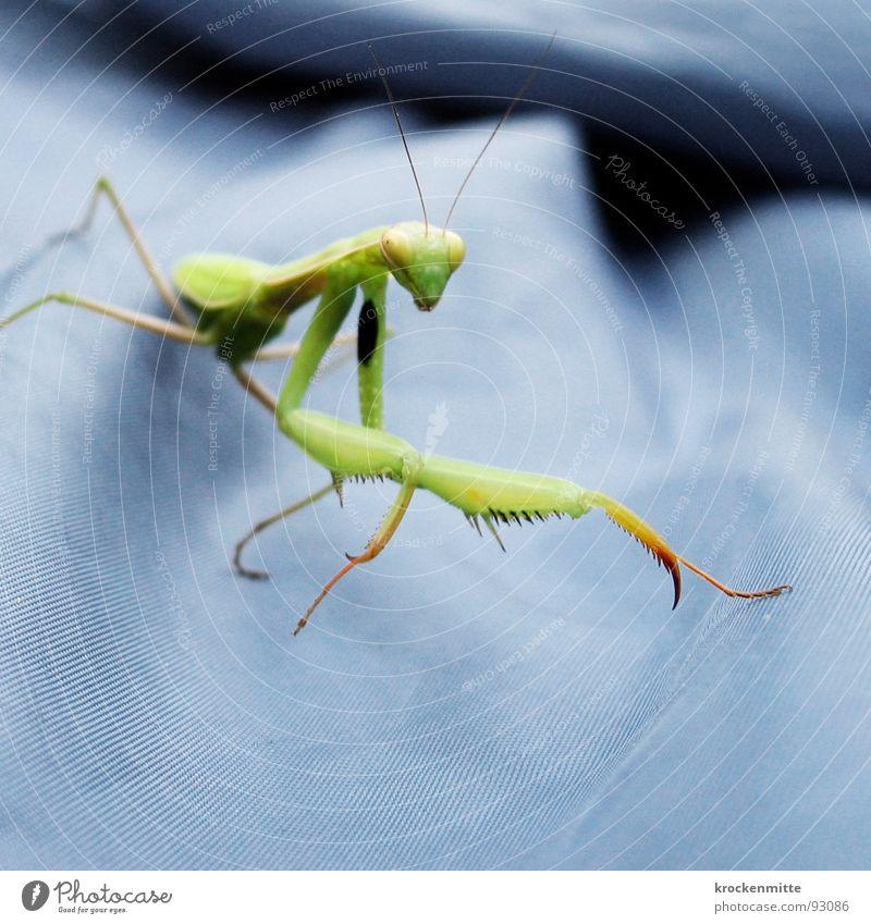 Zum Fressen gern Natur blau grün Flügel Insekt Appetit & Hunger Gebet Opfer Oberschenkel Tentakel Fleischfresser Beutezug