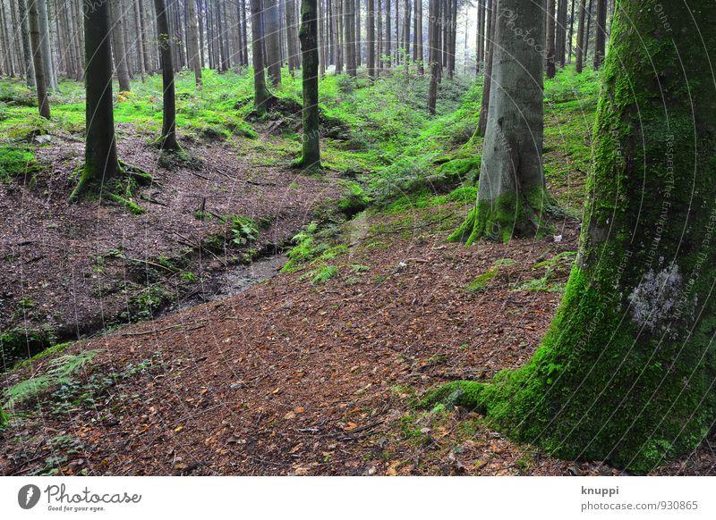 Waldbach II Natur Pflanze grün Wasser Sommer Sonne Baum Landschaft Umwelt Herbst grau hell braun Luft Regen