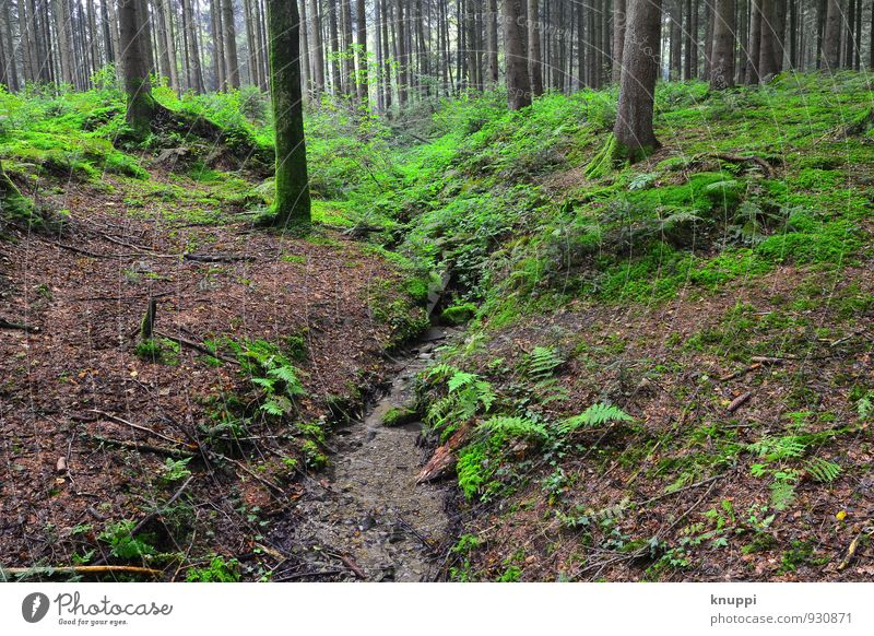 Wald Umwelt Natur Landschaft Pflanze Erde Wasser Sonnenlicht Herbst Klima Klimawandel Schönes Wetter Baum Farn Blatt Grünpflanze Wildpflanze Urwald