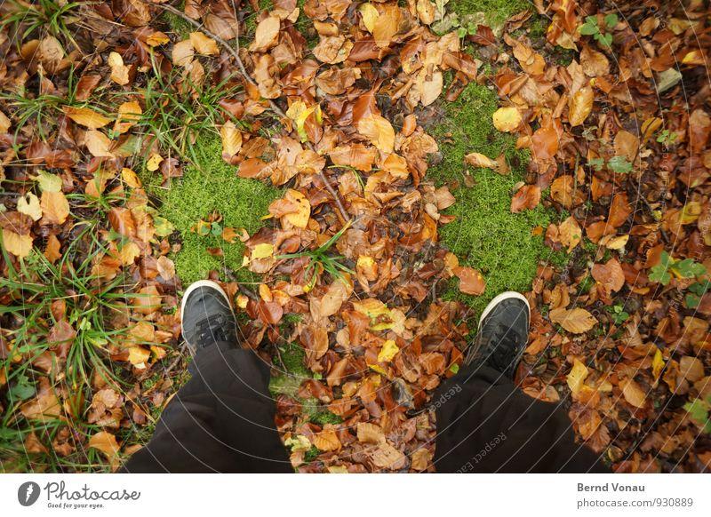 green footprint grün Blatt schwarz Wald Herbst Gras braun Wetter stehen Schuhe Spaziergang Hose unten Moos Herbstlaub herbstlich
