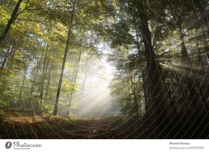 Lichtblick schön Sonne wandern Natur Herbst Wärme Baum Wald Wege & Pfade stark Stimmung Strahlung strahlenförmig intensiv Herbstlaub Spaziergang Spazierweg