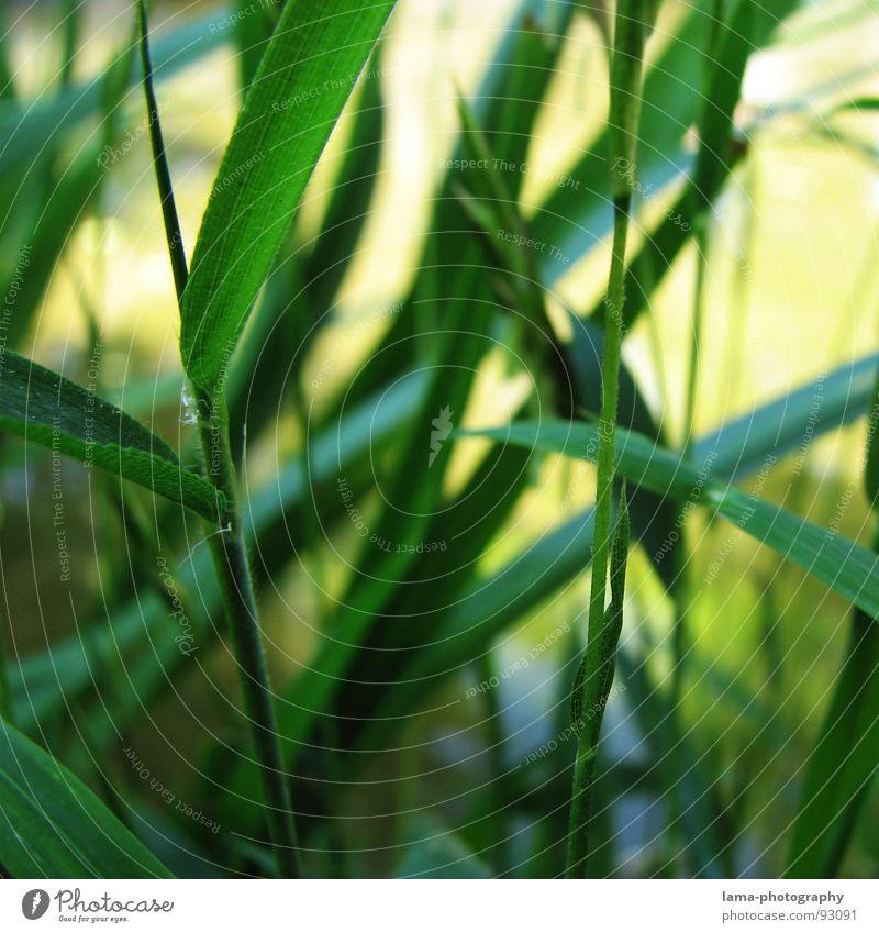Bamboo Garden Garten Umwelt Natur Pflanze Wasser Frühling Gras Bambus Bambushalm Park Urwald Wachstum saftig grün Japan China Asien Halm Schilfrohr verzweigt