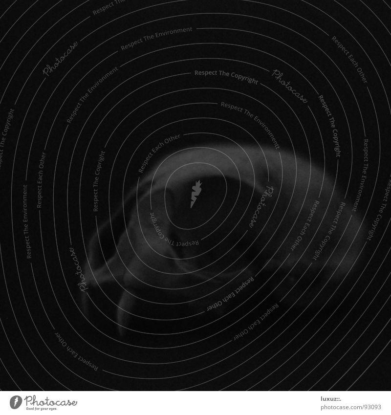 Tod und Teufel Paddel Skelett schwarz dunkel kaputt grauenvoll unheimlich geisterhaft außergewöhnlich Trauer Vergänglichkeit obskur Trophäe Wappentier