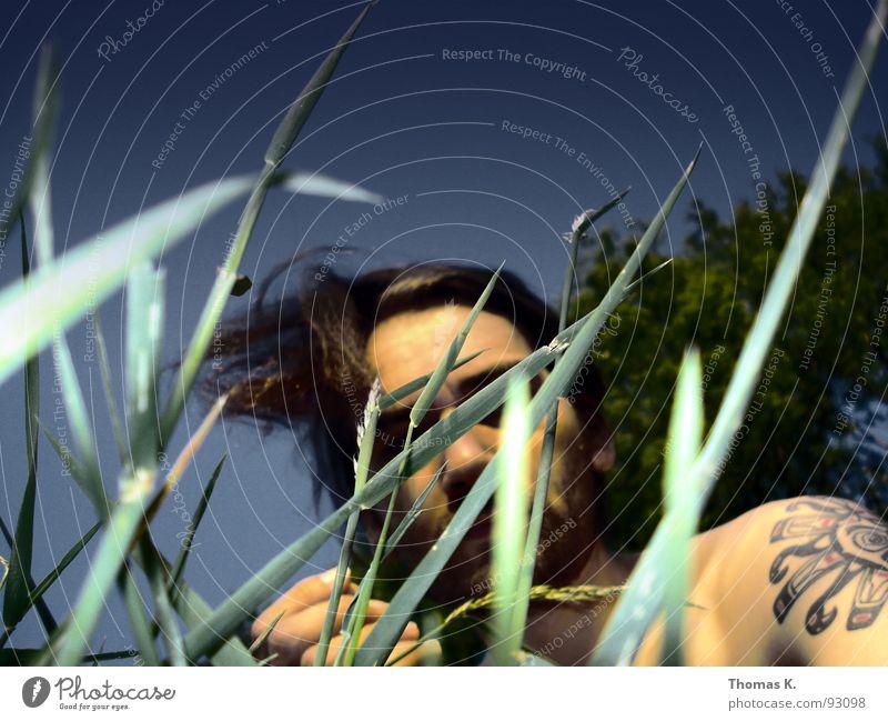 Sonne Sommer Gras Wiese Baum Porträt Erholung Rasen Garten Himmel Wind