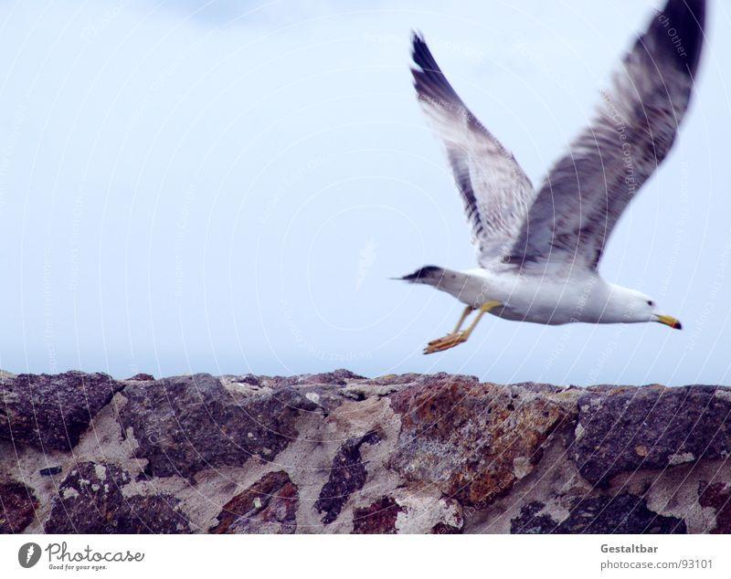 Spread Your Wings (Before They Fall Apart) Himmel Wolken Bewegung Freiheit Glück Stein Mauer Vogel fliegen Beginn Luftverkehr Flügel Möwe schlechtes Wetter