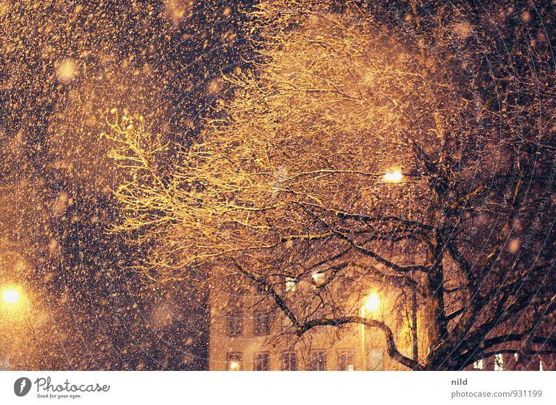 Winter wirds Umwelt Klima Wetter schlechtes Wetter Unwetter Wind Sturm Eis Frost Schnee Schneefall Baum Stadt Haus Fassade kalt orange schwarz