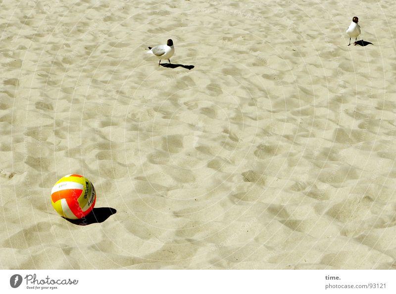Unspielbar, meint Jonathan Schatten Freizeit & Hobby Spielen Strand Ball Sand Feld Vogel Neugier Spielfeld Elfmeter möve unbespielbar abstand halten keep cool