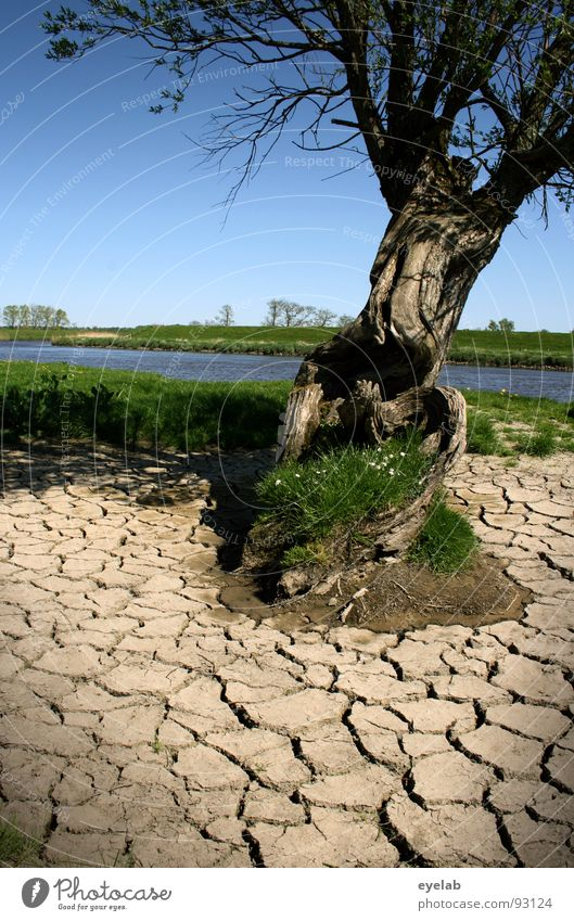 Klima als solches ist noch keine Katastrophe Baum dehydrieren Ödland Holz Ebene Schönes Wetter Gras Ebbe Flußbett Frühling kalt feucht Dürre Feld
