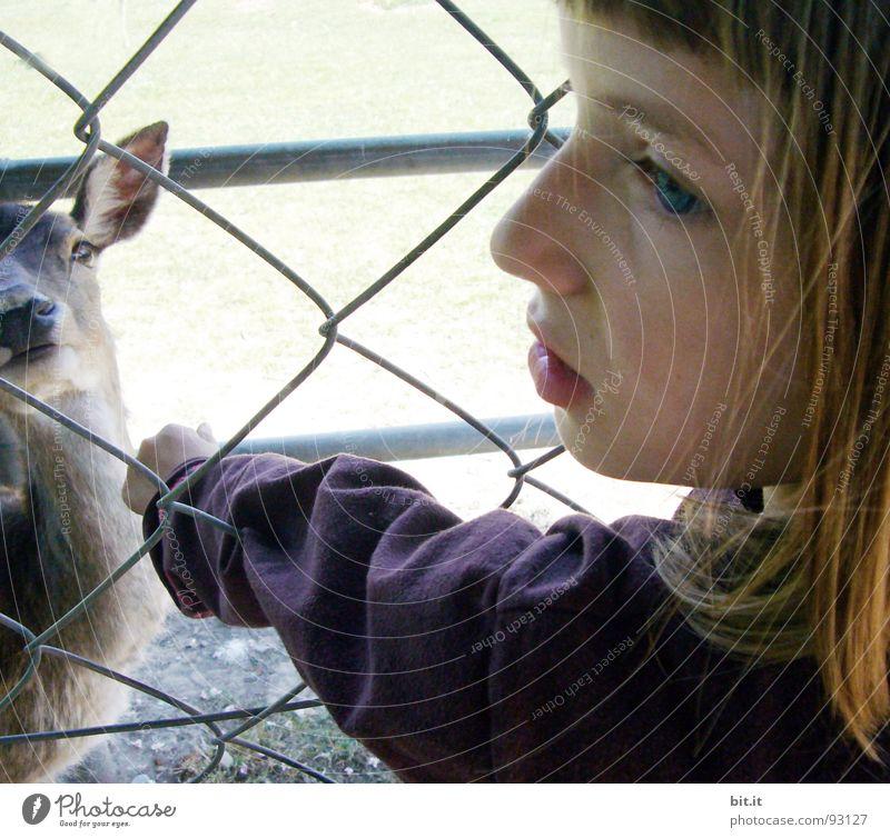 REH-AUGEN Natur Tier Auge Haare & Frisuren Kopf Freundschaft Park braun Wind Rücken Ausflug berühren Frieden Vertrauen zart Zoo