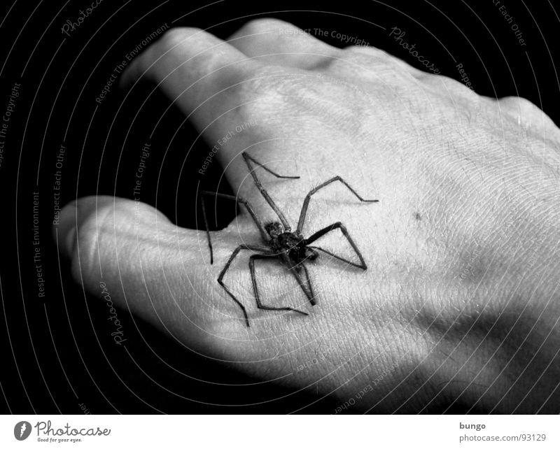 Nach den Killerquappen... Hand Finger Mann Spinne Panik Ekel furchtbar dunkel schwarz weiß Angst hausspinne arachnaphobie Beine fingerknochen trist