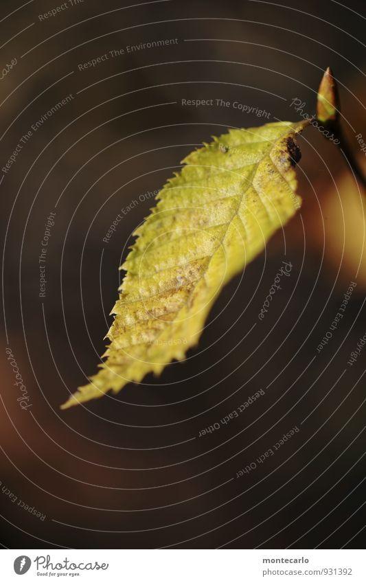 Entfaltungsmöglichkeiten | jung und alt Umwelt Natur Pflanze Herbst Blatt Grünpflanze Wildpflanze Blütenknospen dünn authentisch einfach frisch Zusammensein