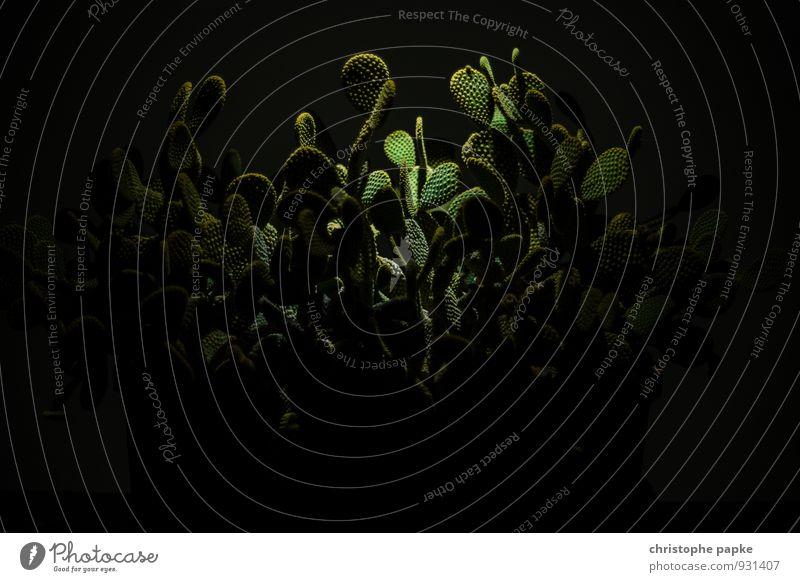 Nightmare on Cactus Street Pflanze Kaktus Wildpflanze exotisch Wachstum bedrohlich dunkel gruselig stachelig Angst bizarr Sträucher bewachsen Surrealismus