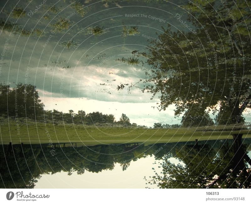 ILLUSIONS Natur Wasser Baum Ferne Wald Erholung Wiese träumen See Park Regen Umwelt Sträucher Freizeit & Hobby Dresden Amerika
