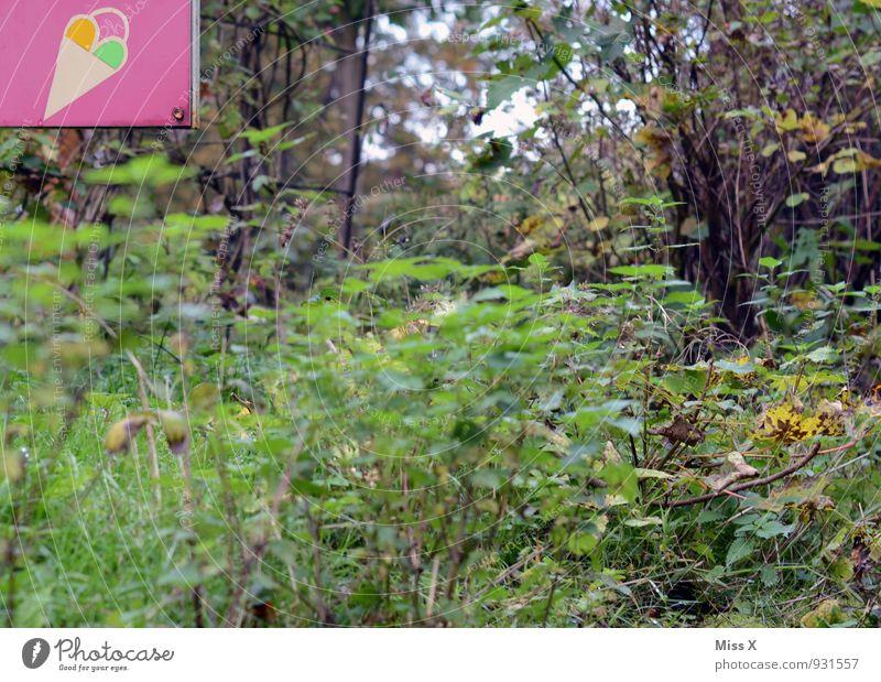 oben links Lebensmittel Speiseeis Ernährung Sommer Pflanze Gras Sträucher Blatt Schilder & Markierungen kalt lecker süß Eisdiele Eiswaffel verkaufen