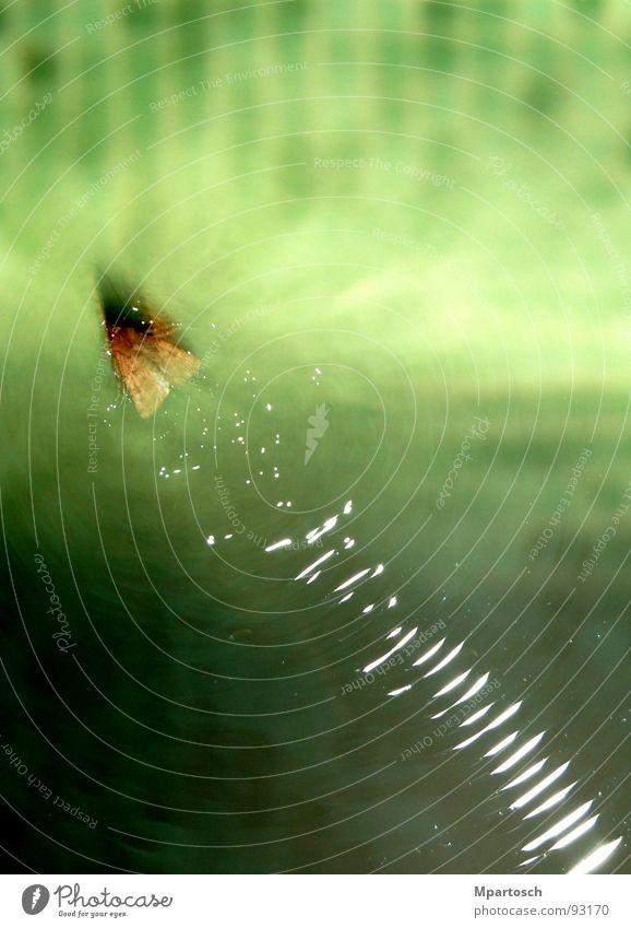 Wasserski mal anders Wasser grün Wellen Geschwindigkeit Schwimmbad Schmetterling Motte