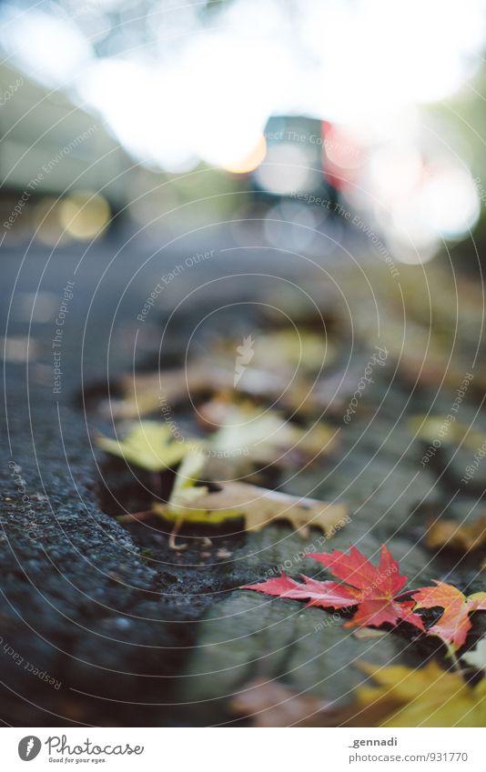 Game Over rot Blatt Herbst liegen beobachten Asphalt