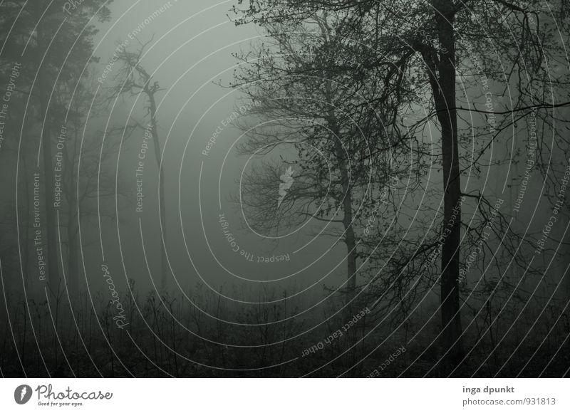 ...und der Tag wird grau Umwelt Natur Landschaft Pflanze Urelemente Luft Herbst Winter Wetter schlechtes Wetter Nebel Baum Wald dunkel Traurigkeit Stimmung