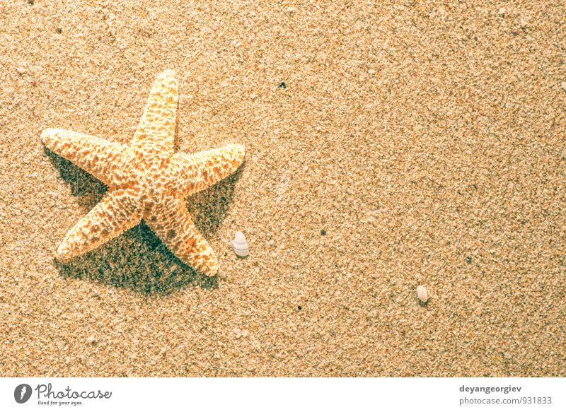 Himmel Natur Ferien & Urlaub & Reisen blau schön Sommer Sonne Erholung Meer Strand Küste Sand Freizeit & Hobby Idylle Tourismus Paradies