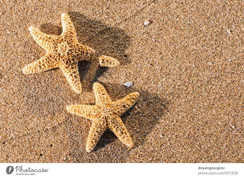 Sonnenaufgang am Strand schön Erholung Freizeit & Hobby Ferien & Urlaub & Reisen Tourismus Sommer Meer Natur Sand Himmel Küste blau Idylle Seestern Stern Wasser