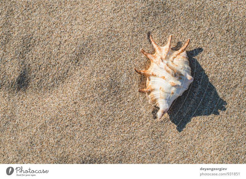 Himmel Natur Ferien & Urlaub & Reisen blau weiß Sommer Sonne Erholung Meer Landschaft Strand Küste Sand Idylle Wellen Tourismus