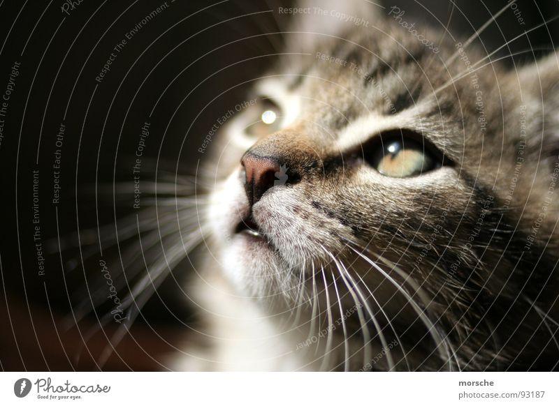 Kätzsche... Auge Katze Nase Sehnsucht Säugetier Schnurrhaar Querformat