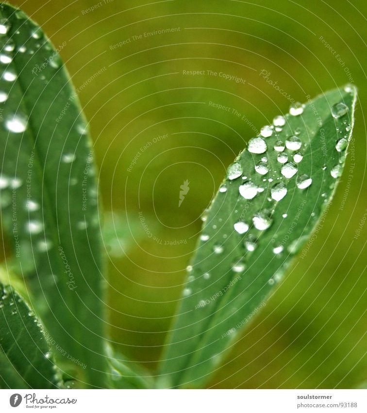 Drops... Wasser grün Pflanze Blatt Frühling Regen Wassertropfen nass Gefäße Blattgrün