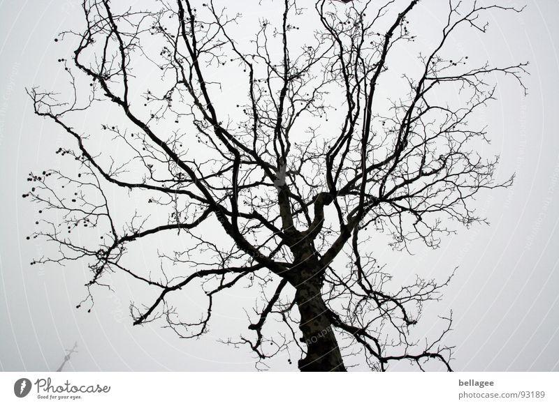 Baumkrone im winter Himmel Winter grau Regen trist Ast laublos