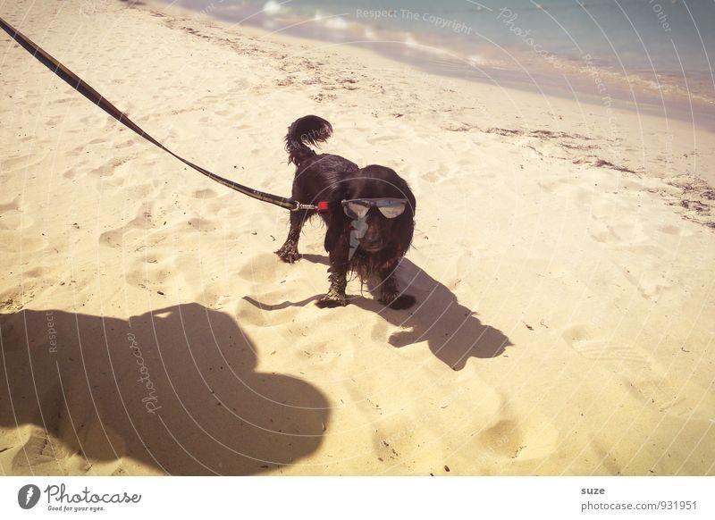 Beach-Boy Lifestyle Stil Freizeit & Hobby Ferien & Urlaub & Reisen Sommer Sommerurlaub Strand Meer Sand Küste Mode Accessoire Sonnenbrille Tier Haustier Hund 1