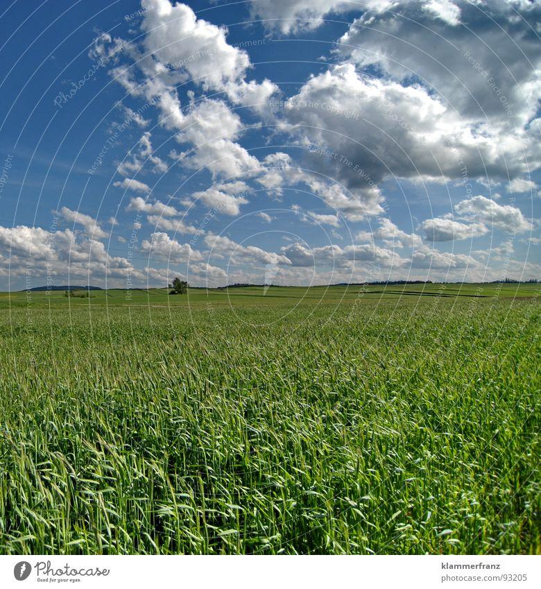Das Leben Feld Hoffnung Gras Horizont Wolken Himmel schlechtes Wetter ruhig Einsamkeit Gelassenheit Landschaft Weitwinkel grün Hintergrundbild Ernährung