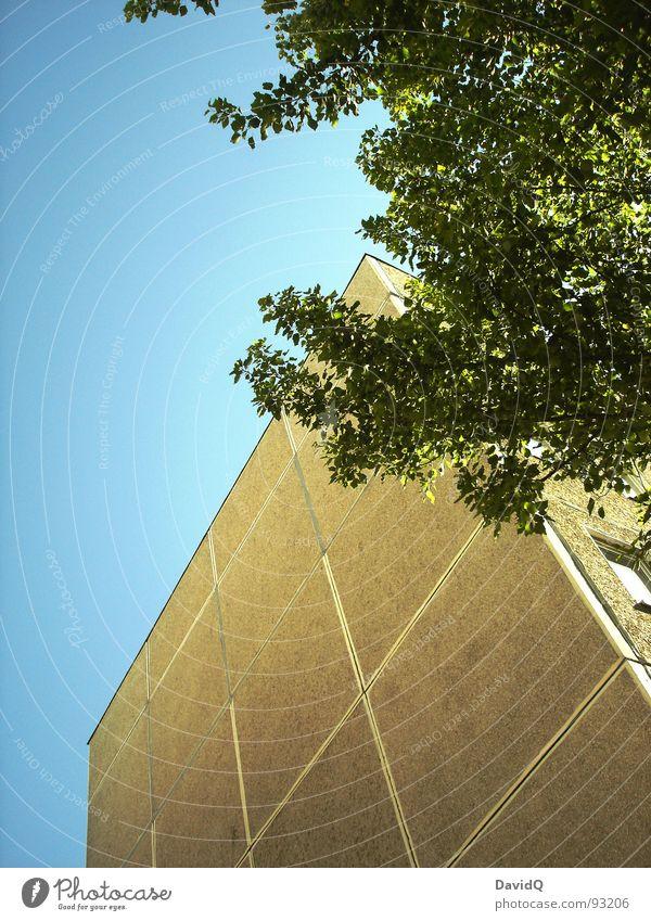 3/3 Baum grün grau Luft Beton Dreiteilung Plattenbau ungemütlich eng Sauerstoff frisch leicht Blatt Leben Wachstum sprießen Lebensraum Himmel blau Natur