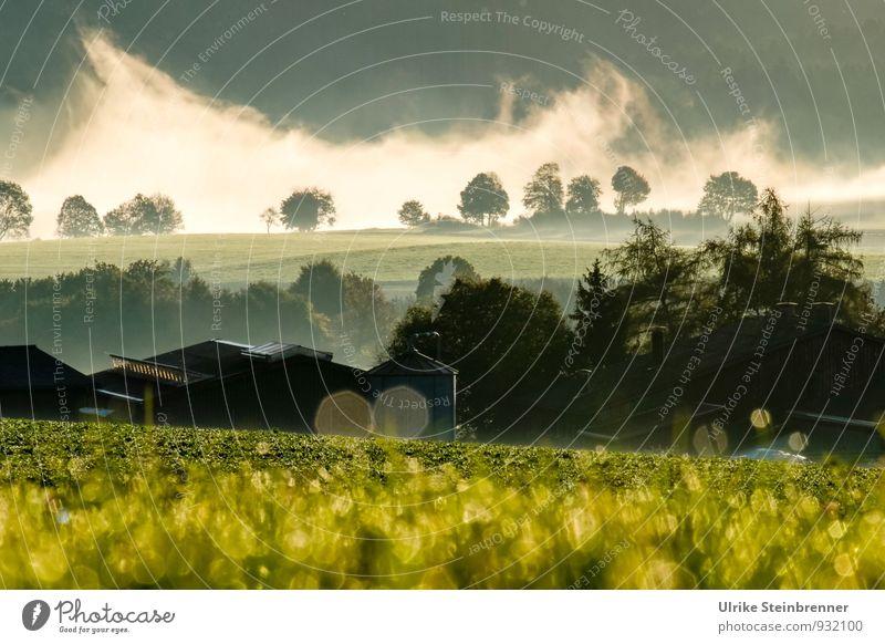 Nebelwallen 5 Natur Pflanze Wasser Baum Landschaft Haus Wald Umwelt Herbst Gras natürlich glänzend Luft Feld Sträucher