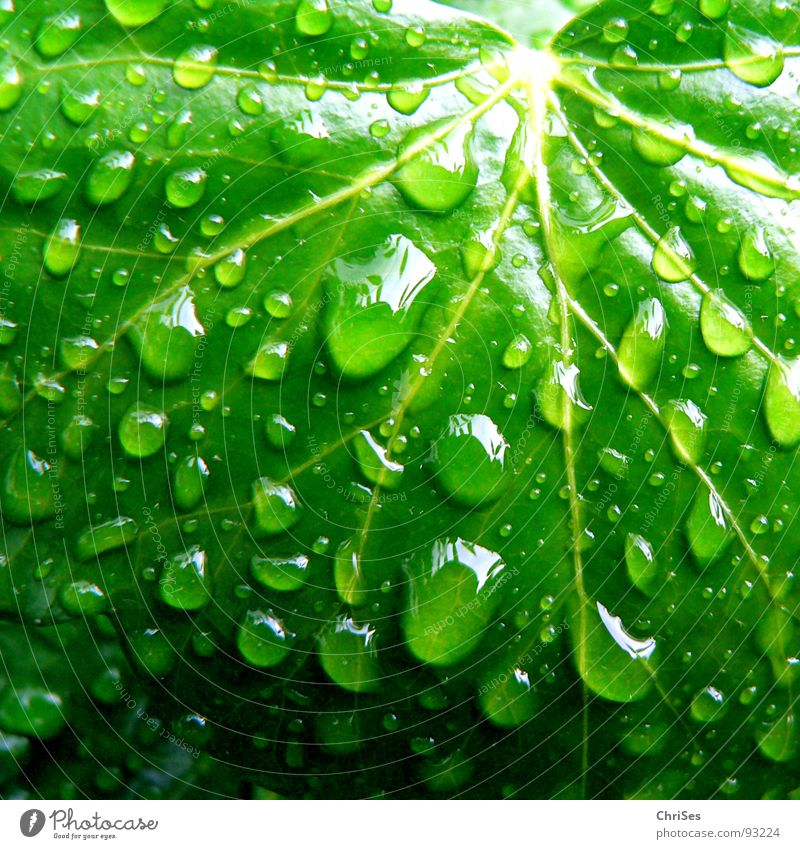 Regentropfen 01 Natur Wasser grün Pflanze Blatt Frühling Wassertropfen nass Bad feucht Botanik Efeu Grünpflanze Kletterpflanzen