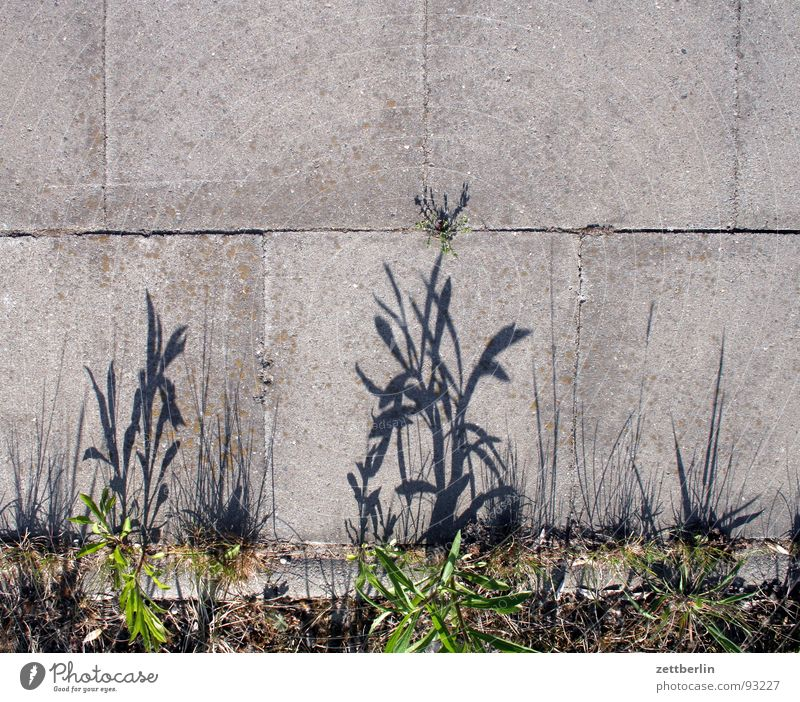 Randzone {f} = fringe Am Rand Bürgersteig Pflanze Gras Beton Fuge Verkehrswege Stein Mineralien Wege & Pfade Schatten Spaziergang Bodenplatten